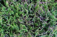 Υπόβαθρο λουλουδιών φύλλων Στοκ φωτογραφίες με δικαίωμα ελεύθερης χρήσης