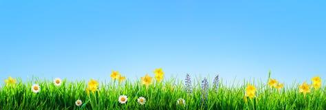 Υπόβαθρο λουλουδιών χλόης και άνοιξη ελεύθερη απεικόνιση δικαιώματος