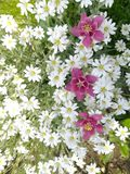 Υπόβαθρο λουλουδιών, όμορφος floral στοκ εικόνες