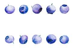 Υπόβαθρο με τα βακκίνια σε Watercolor Στοκ Φωτογραφίες