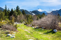 Υπόβαθρο με τα βουνά χιονιού, πράσινα δέντρα άνοιξη Στοκ εικόνα με δικαίωμα ελεύθερης χρήσης