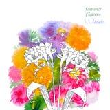 Υπόβαθρο με τα θερινά λουλούδια και watercolors-05 Στοκ Εικόνες