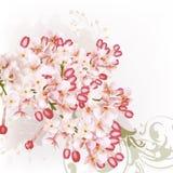 Υπόβαθρο με τα ιώδη λουλούδια Στοκ φωτογραφία με δικαίωμα ελεύθερης χρήσης