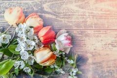 Υπόβαθρο με τα λουλούδια και τα πέταλα των δέντρων και των τουλιπών της Apple, με το διάστημα αντιγράφων Στοκ Εικόνα
