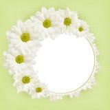 Υπόβαθρο με τα λουλούδια μαργαριτών Στοκ εικόνα με δικαίωμα ελεύθερης χρήσης