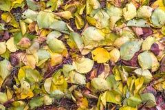 Υπόβαθρο με τα πεσμένα φύλλα στο πάρκο φθινοπώρου Στοκ Φωτογραφίες