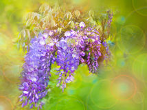 Υπόβαθρο με τα πορφυρά λουλούδια Στοκ Εικόνες