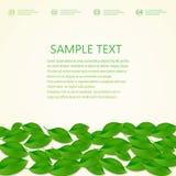 Υπόβαθρο με τα πράσινα φρέσκα φύλλα και θέση για διανυσματική απεικόνιση