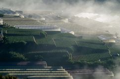 Υπόβαθρο με τα πυκνά αγροκτήματα κάλυψης ομίχλης και δάσος στο μέρος 6 αυγής στοκ φωτογραφίες με δικαίωμα ελεύθερης χρήσης