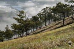 Υπόβαθρο με τα πυκνά αγροκτήματα κάλυψης ομίχλης και δάσος στο μέρος 12 αυγής στοκ εικόνες με δικαίωμα ελεύθερης χρήσης