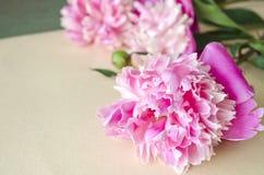 Υπόβαθρο με τα ρόδινα peonies λεπτομερές ανασκόπηση floral διάνυσμα σχεδίων Floral σύνθεση με τα peony λουλούδια Στοκ φωτογραφία με δικαίωμα ελεύθερης χρήσης