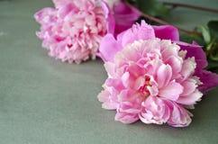 Υπόβαθρο με τα ρόδινα peonies λεπτομερές ανασκόπηση floral διάνυσμα σχεδίων Floral σύνθεση με τα peony λουλούδια Στοκ Εικόνα