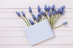 Υπόβαθρο με τα φρέσκα λουλούδια muscaries άνοιξη μπλε και το κενό αριθ. Στοκ Φωτογραφίες