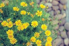 Υπόβαθρο με τα όμορφα κίτρινα λουλούδια στοκ εικόνα με δικαίωμα ελεύθερης χρήσης