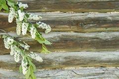 Υπόβαθρο με τα flowerss στο ξύλινο υπόβαθρο από τα κούτσουρα Στοκ εικόνα με δικαίωμα ελεύθερης χρήσης