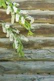 Υπόβαθρο με τα flowerss στο ξύλινο υπόβαθρο από τα κούτσουρα Στοκ Φωτογραφίες