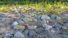 Υπόβαθρο με την άμμο, τις πέτρες και τις εγκαταστάσεις Στοκ Φωτογραφία