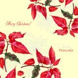 Υπόβαθρο με την ανθοδέσμη του poinsettia Χριστουγέννων Στοκ Εικόνα