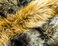Υπόβαθρο με τη ζωική γούνα Στοκ Φωτογραφίες