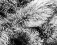Υπόβαθρο με τη ζωική γούνα Στοκ φωτογραφία με δικαίωμα ελεύθερης χρήσης