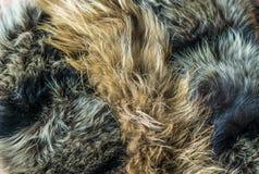 Υπόβαθρο με τη ζωική γούνα Στοκ Εικόνα
