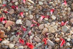 Υπόβαθρο με τη σύσταση των πετρών και των λουλουδιών των πτώσεων ceibo στοκ εικόνες