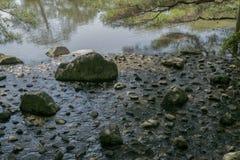 Υπόβαθρο με τους βράχους στη λίμνη στο Κιότο, Ιαπωνία στοκ εικόνα