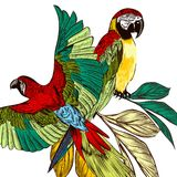 Υπόβαθρο με τους ζωηρόχρωμους τροπικούς παπαγάλους Στοκ φωτογραφία με δικαίωμα ελεύθερης χρήσης