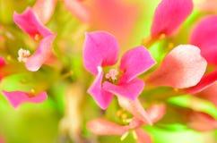 Υπόβαθρο με το λουλούδι Στοκ φωτογραφίες με δικαίωμα ελεύθερης χρήσης