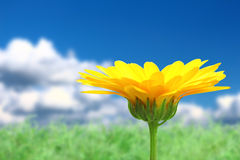Υπόβαθρο με το πορτοκαλί λουλούδι στον ουρανό στοκ εικόνα