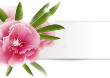 Υπόβαθρο με το ρόδινο λουλούδι Στοκ Φωτογραφία