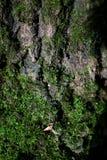 Υπόβαθρο με το φλοιό δέντρων Στοκ Φωτογραφίες