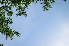 Υπόβαθρο μπλε ουρανού με τα δέντρα Στοκ εικόνα με δικαίωμα ελεύθερης χρήσης
