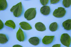 Υπόβαθρο ομορφιάς με τα φύλλα στο μπλε κρητιδογραφιών r στοκ φωτογραφία με δικαίωμα ελεύθερης χρήσης