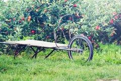 Υπόβαθρο οπωρώνων της Apple με τα δέντρα μηλιάς Στοκ Εικόνες
