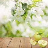 Υπόβαθρο οργανικής τροφής με τα πράσινα φρούτα της Apple Στοκ Εικόνα