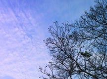 Υπόβαθρο ουρανού δέντρων Στοκ εικόνα με δικαίωμα ελεύθερης χρήσης