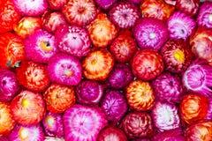 Υπόβαθρο λουλουδιών αχύρου Στοκ Φωτογραφίες