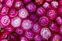 Υπόβαθρο λουλουδιών αχύρου Στοκ Φωτογραφία