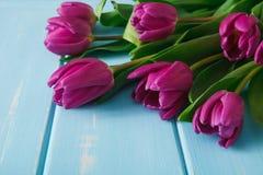 Υπόβαθρο λουλουδιών, ιώδεις τουλίπες στο μπλε ξύλο, διάστημα αντιγράφων Στοκ Φωτογραφία