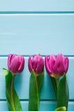 Υπόβαθρο λουλουδιών, ιώδεις τουλίπες στο μπλε ξύλο, διάστημα αντιγράφων Στοκ φωτογραφία με δικαίωμα ελεύθερης χρήσης