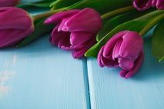 Υπόβαθρο λουλουδιών, ιώδεις τουλίπες στο μπλε ξύλο, διάστημα αντιγράφων Στοκ Εικόνες