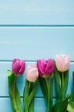 Υπόβαθρο λουλουδιών, ιώδεις τουλίπες στο μπλε ξύλο, διάστημα αντιγράφων Στοκ εικόνα με δικαίωμα ελεύθερης χρήσης