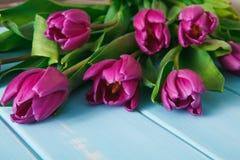 Υπόβαθρο λουλουδιών, ιώδεις τουλίπες στο μπλε ξύλο, διάστημα αντιγράφων Στοκ Εικόνα