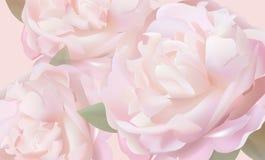 Υπόβαθρο λουλουδιών με τα peonies και τα πέταλα Στοκ εικόνες με δικαίωμα ελεύθερης χρήσης