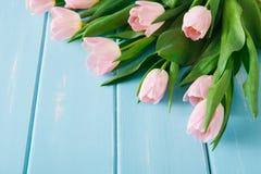 Υπόβαθρο λουλουδιών, ρόδινες τουλίπες στο μπλε ξύλο, διάστημα αντιγράφων Στοκ φωτογραφία με δικαίωμα ελεύθερης χρήσης