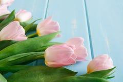 Υπόβαθρο λουλουδιών, ρόδινες τουλίπες στο μπλε ξύλο, διάστημα αντιγράφων Στοκ Εικόνες