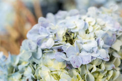 Υπόβαθρο λουλουδιών σε ένα τροπικό νησί του Μπαλί, Ινδονησία Πολύ όμορφο υπόβαθρο λουλουδιών στον ήλιο Κλείστε επάνω τη μακροεντο Στοκ εικόνα με δικαίωμα ελεύθερης χρήσης