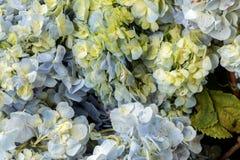 Υπόβαθρο λουλουδιών σε ένα τροπικό νησί του Μπαλί, Ινδονησία Πολύ όμορφο υπόβαθρο λουλουδιών στον ήλιο Κλείστε επάνω τη μακροεντο Στοκ φωτογραφία με δικαίωμα ελεύθερης χρήσης