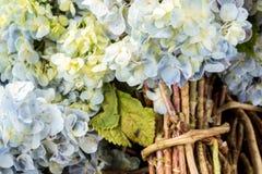 Υπόβαθρο λουλουδιών σε ένα τροπικό νησί του Μπαλί, Ινδονησία Πολύ όμορφο υπόβαθρο λουλουδιών στον ήλιο Κλείστε επάνω τη μακροεντο Στοκ Εικόνες